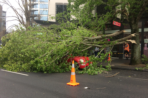 684793794 istock photo Tree crashed on a car due to a very high winds and bad weather 1072054300