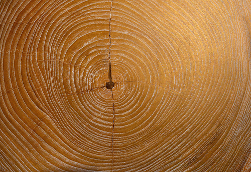 Tree cross section, Nikon Z7