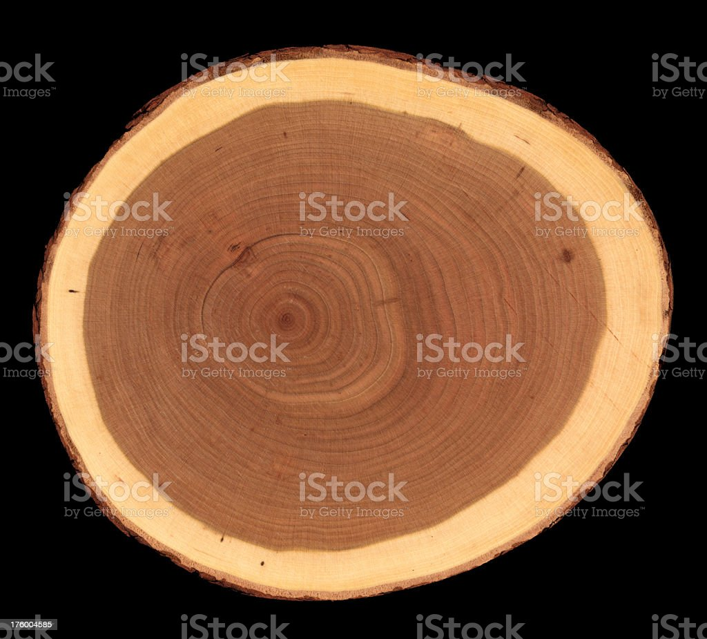 tree cross section royalty-free stock photo