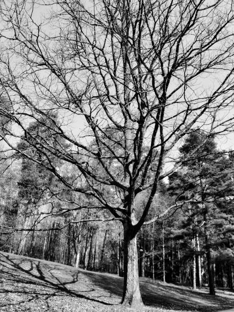 träd krona och kron chakrat - malin strandvall bildbanksfoton och bilder