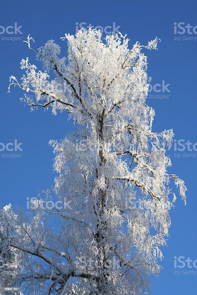 Tree Krone im Schnee Lizenzfreies stock-foto