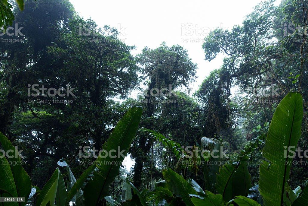 Tree crowns of Monteverde in Costa Rica stock photo