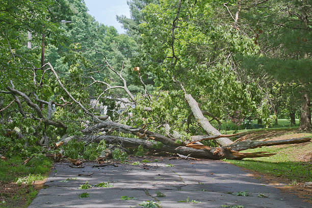 Tree Crumpled Across Road A large oak tree brought down by a storm lies crumbled and broken across a road completely blocking access knocked down stock pictures, royalty-free photos & images