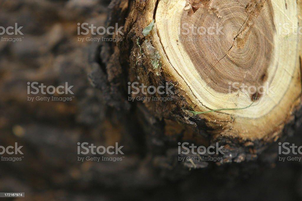 Gemeinsame Baumschnitt Stockfoto und mehr Bilder von Abholzung - iStock #XD_53