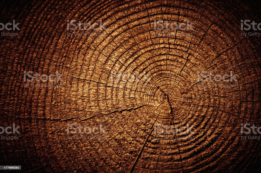 Tree cut texture rings stock photo