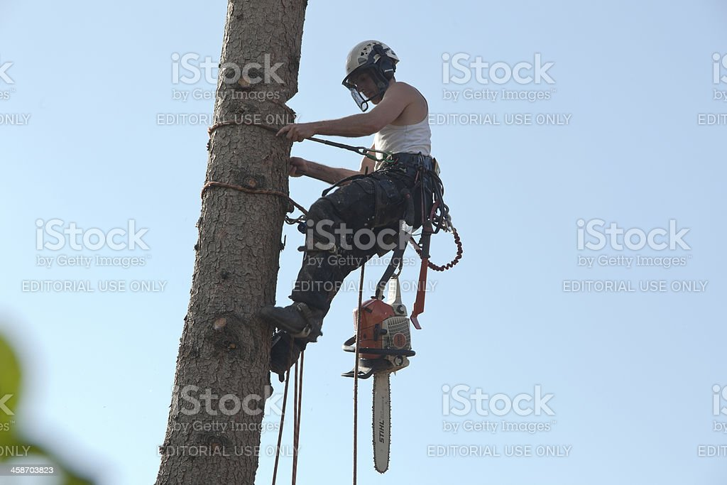 Tree cutter in action. royalty-free stock photo