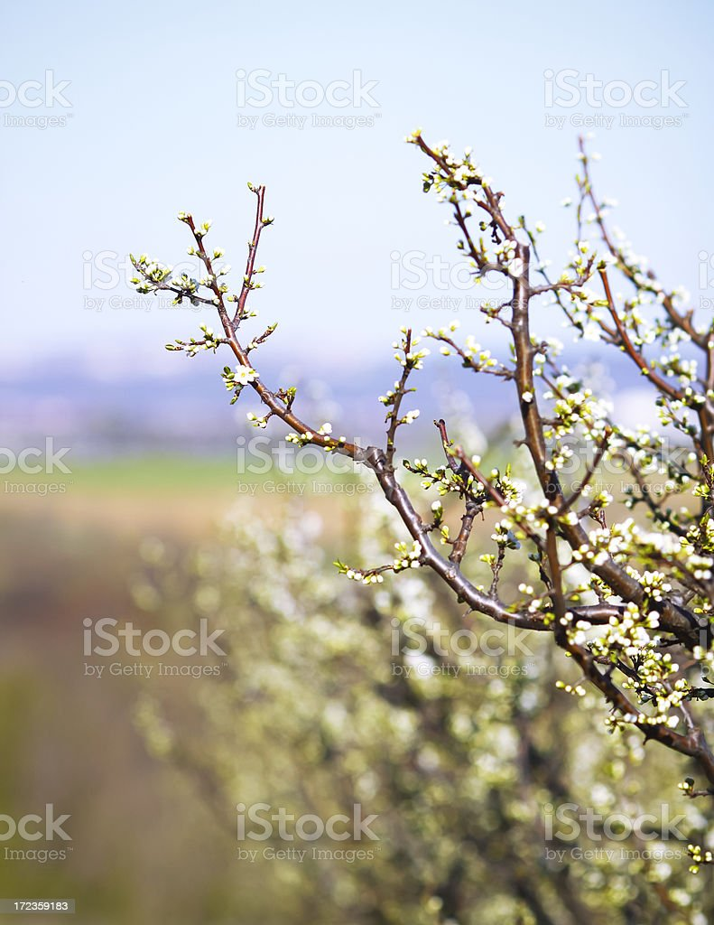 Tree Cutting in Spring royalty-free stock photo