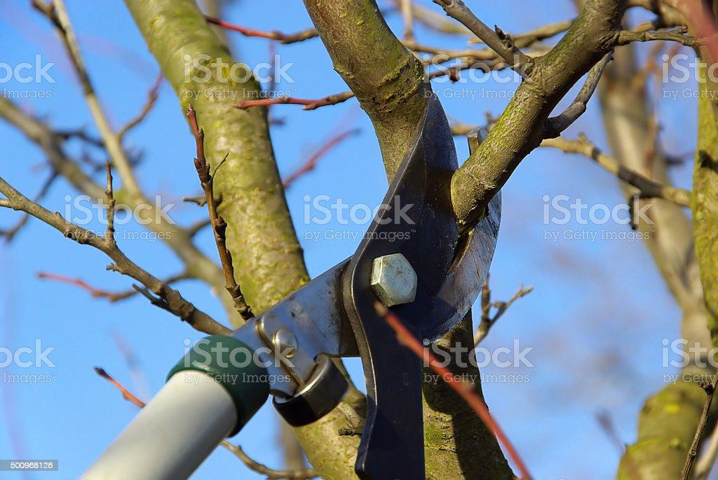 tree cutting stock photo