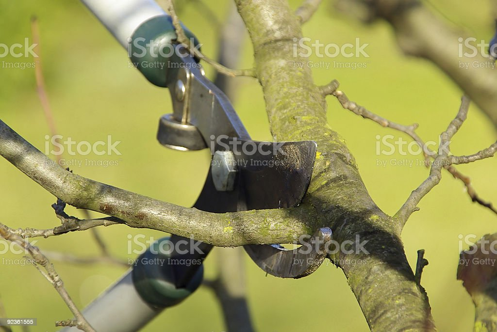 tree cutting royalty-free stock photo