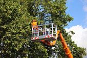 Tree cutting, tree care