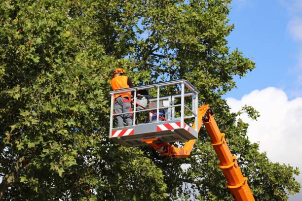 cięcie drzew, pielęgnacja drzew - ciąć zdjęcia i obrazy z banku zdjęć