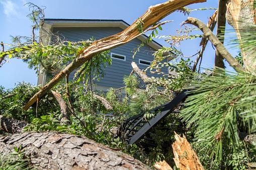 Tree Damage Tornado Hurricane Winds House Insurance