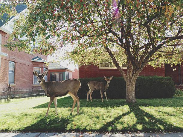 Tree Deer stock photo