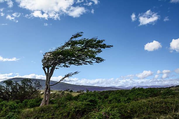 Tree deformed by the wind in Tierra del Fuego – Foto