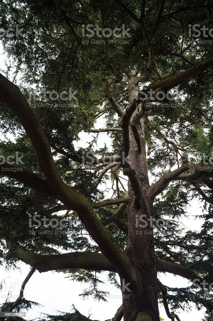 Tree, Detail shot, London, UK royaltyfri bildbanksbilder