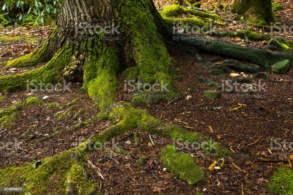 Tree Details stock photo