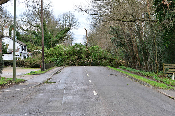 Tree down on the Balcombe road Tree down on the Balcombe road after storm Katie on the morning of 28 March 2016 fallen tree stock pictures, royalty-free photos & images