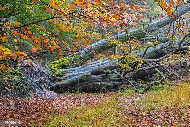 Photo of Tree down