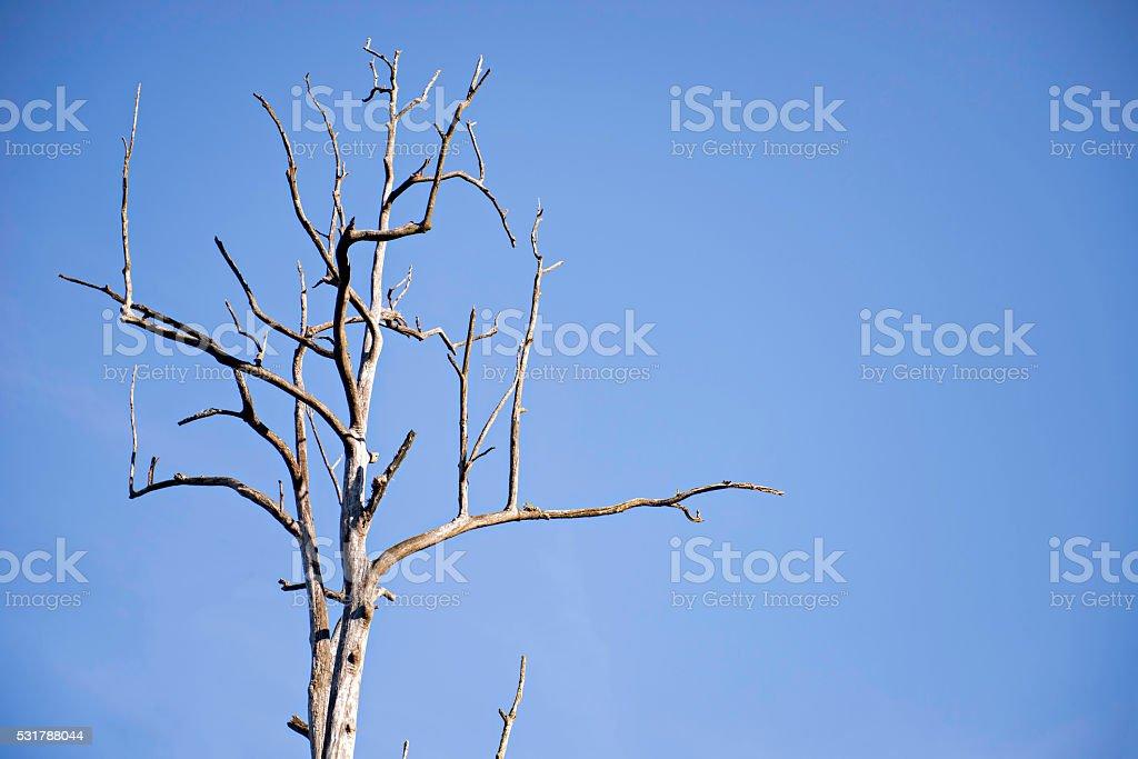 Tree drought stock photo
