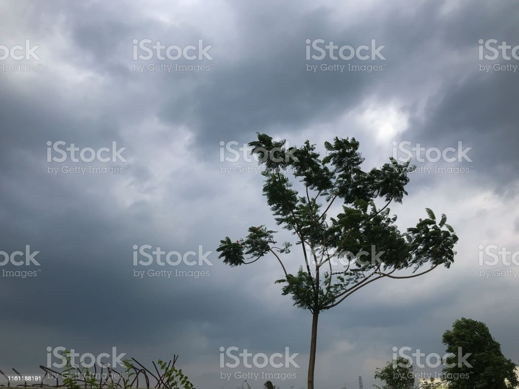 tree during heavy wind before raining at Thailand