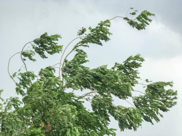 무거운 바람 동안 트리 스톡 사진