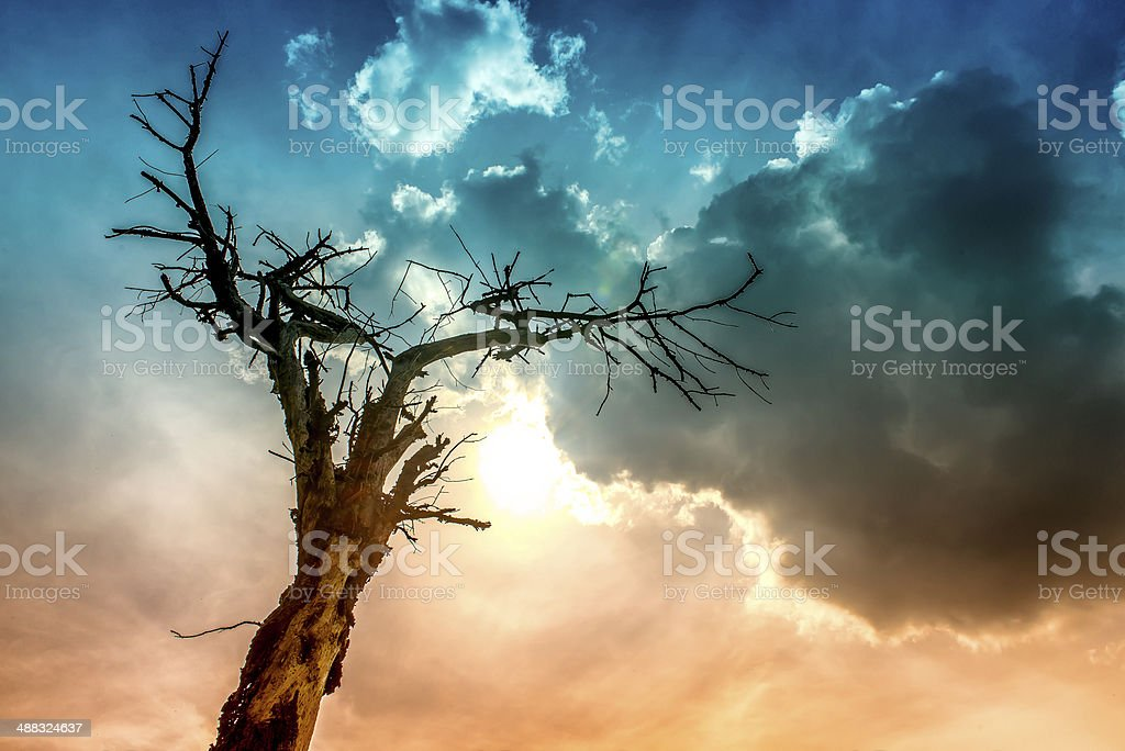 tree ectrocuted and clouds stock photo
