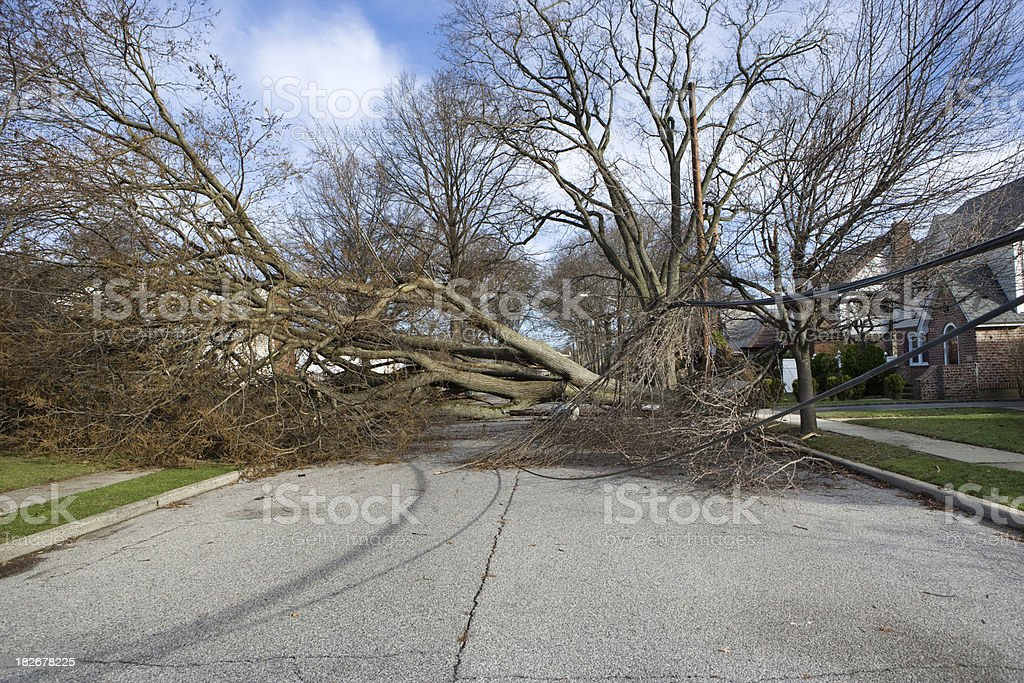Tree fallen from Wind storm stock photo
