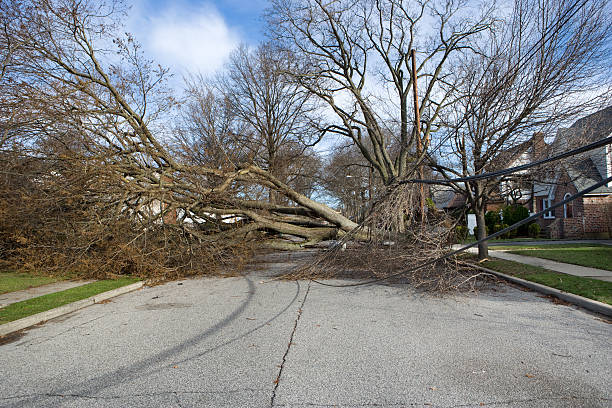 Tree fallen from Wind storm Tree falls after Nor'easter storm and takes down a telephone pole with Transformer.Please Also See: fallen tree stock pictures, royalty-free photos & images