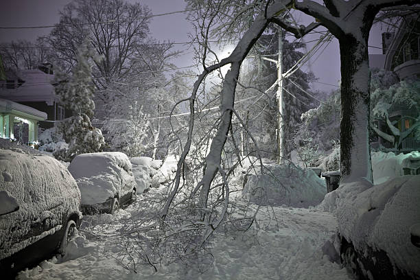 Tree Fallen in Street With Snow A tree collapsed from the weight of a blizzard. fallen tree stock pictures, royalty-free photos & images