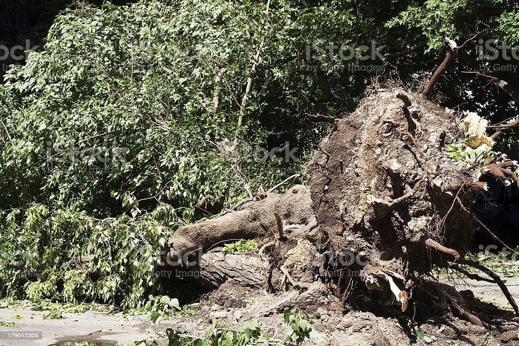 tree fallen royalty-free stock photo