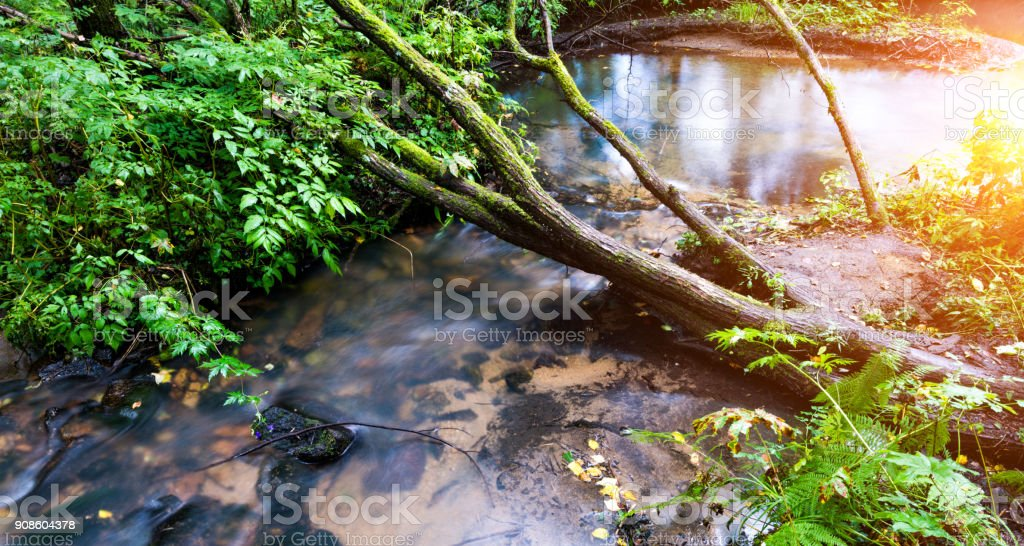 A tree falling in a river stock photo