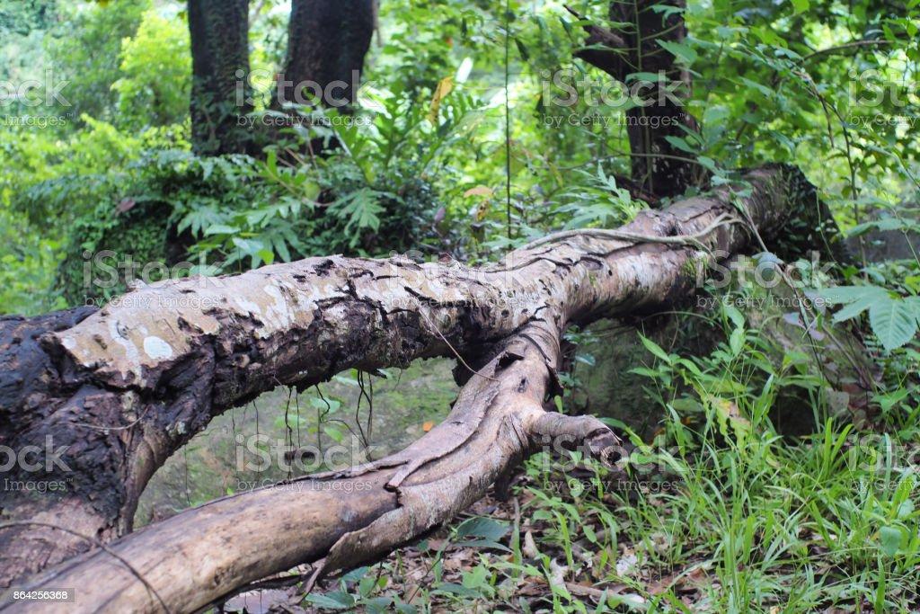 Tree falling royalty-free stock photo