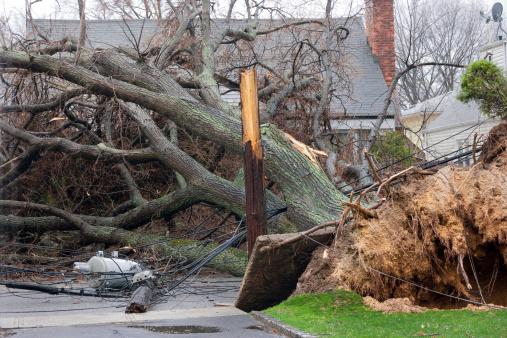 Tree falls on power lines