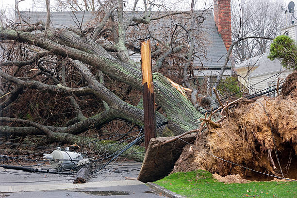 Tree falls on power lines Tree falls after Nor'easter storm and takes down a telephone pole with Transformer.Please Also See: fallen tree stock pictures, royalty-free photos & images
