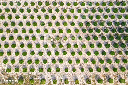 Tree farm viewed from above.