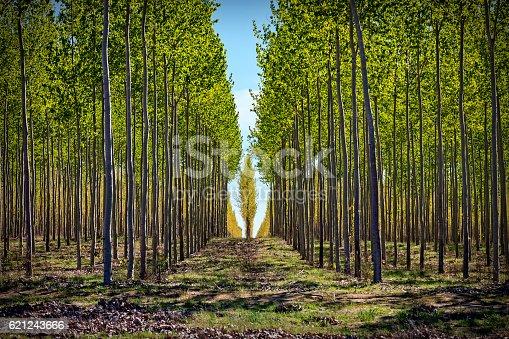 Large tree farming operation near Hermiston, Oregon.