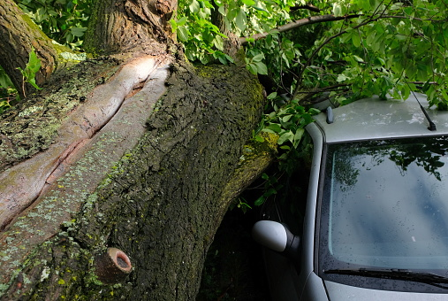 A tree fell on a car during a hurricane. Broken tree on a car close-up