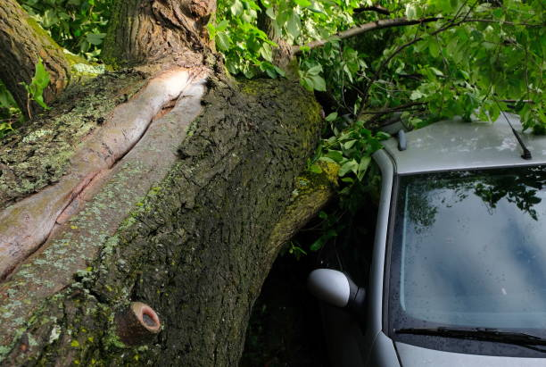 A tree fell on a car during a hurricane. Broken tree on a car close-up A tree fell on a car during a hurricane. Broken tree on a car close-up in amsterdam netherlands fallen tree stock pictures, royalty-free photos & images