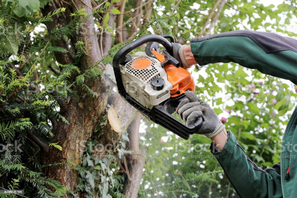 Baum felling – Foto