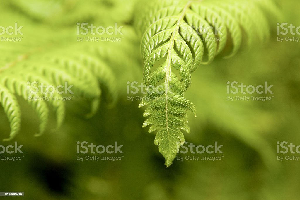 Tree Fern close up South Africa stock photo