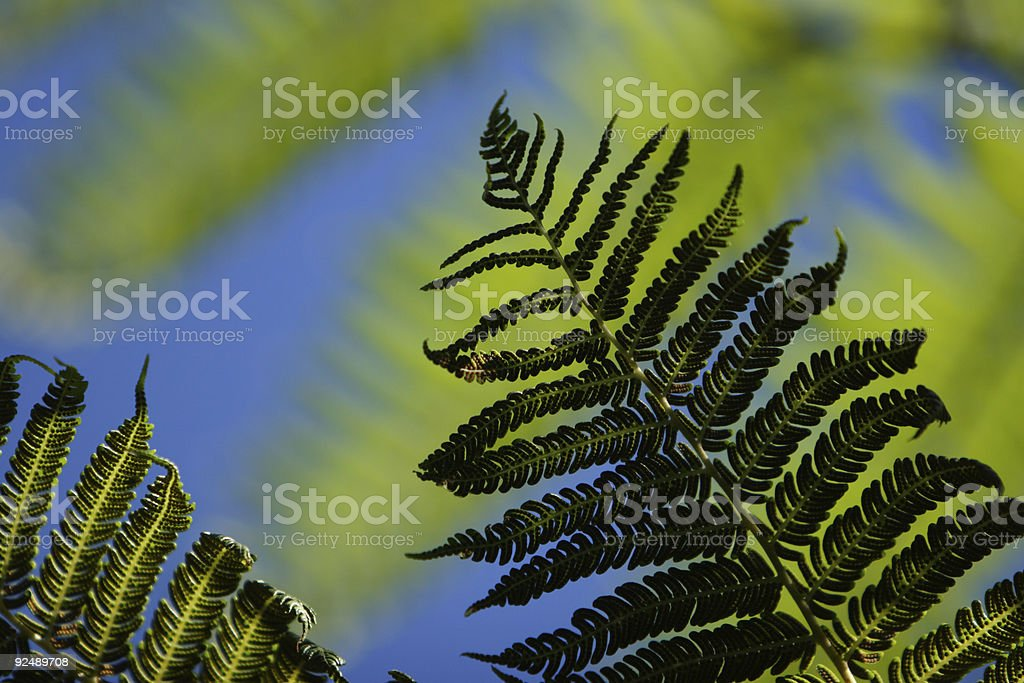 Tree fern detail royalty-free stock photo