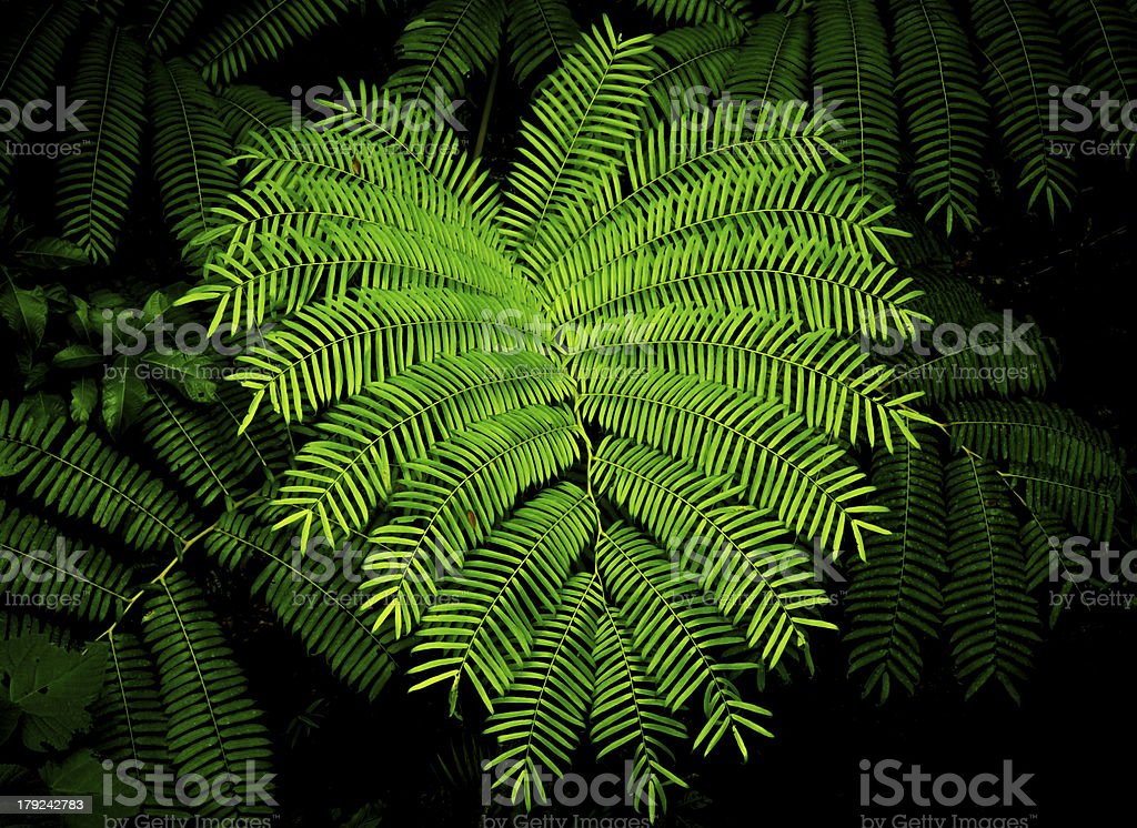 Tree fern in dense rainforest stock photo