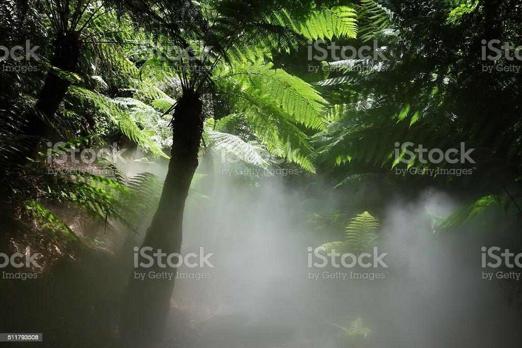 Tree fern in the fog stock photo