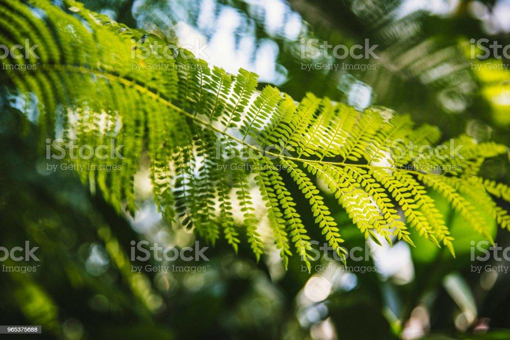 Tree fern plant branch zbiór zdjęć royalty-free