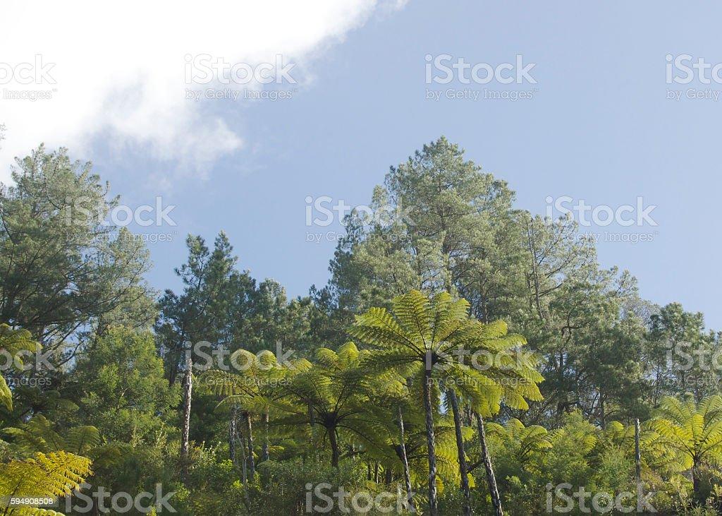 Tree ferns at Te Puna Quarry Park Tauranga, New Zealand stock photo