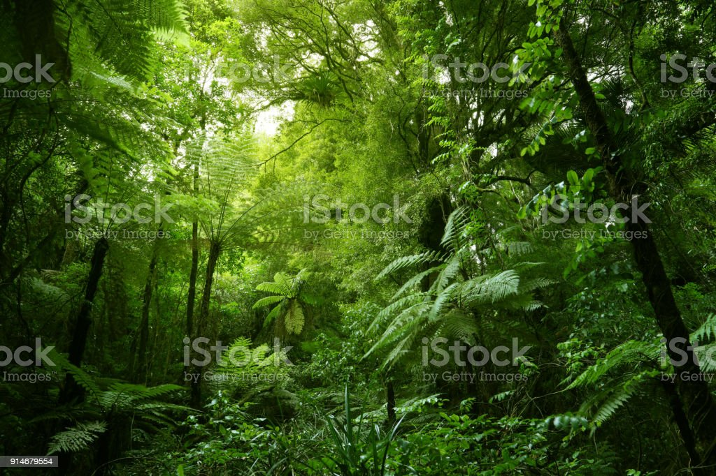 Tree ferns in jungle stock photo