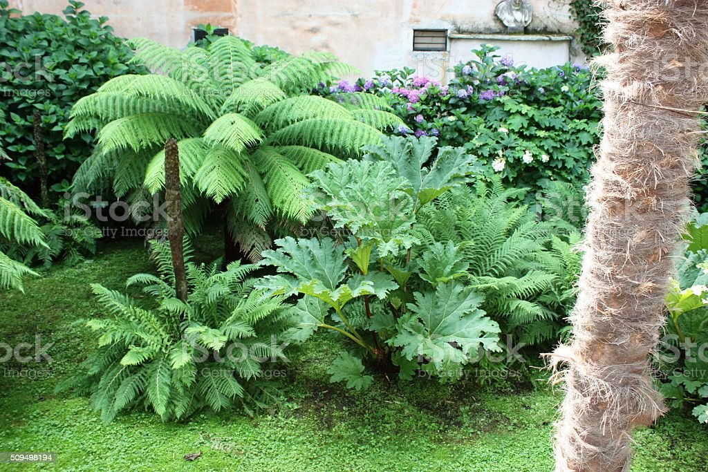 Tree ferns in the garden of Isola Madre, Italy stock photo