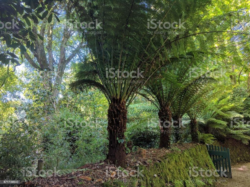 Tree ferns stock photo