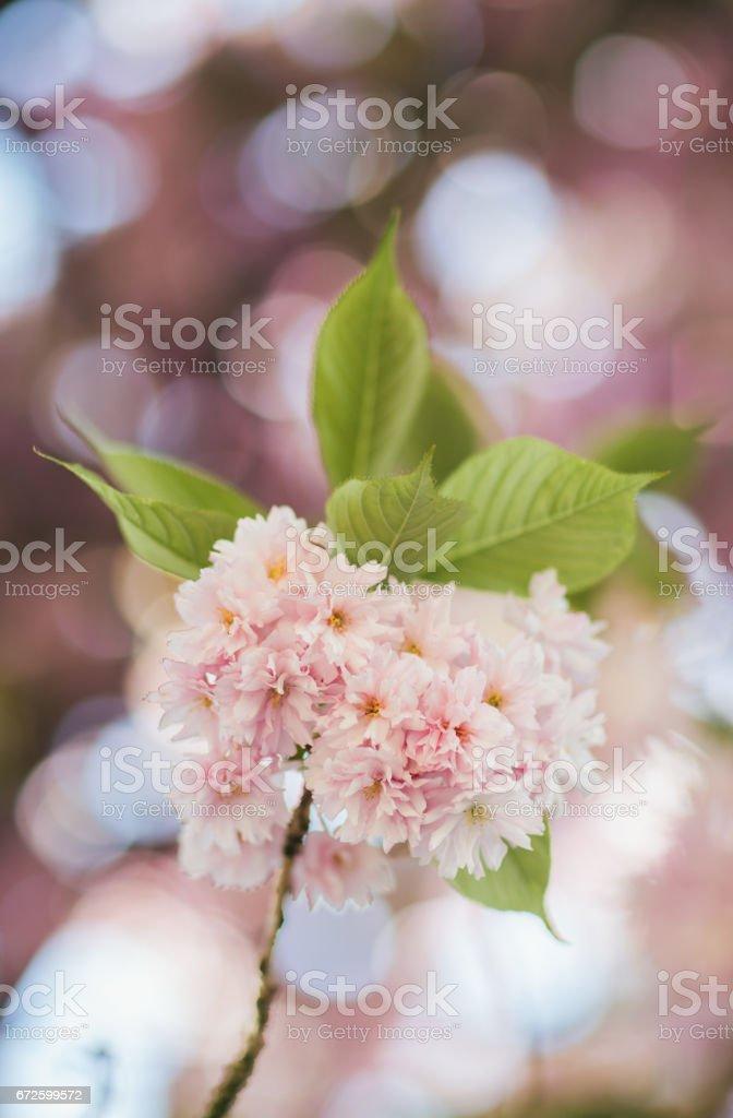 Tree flowers stock photo
