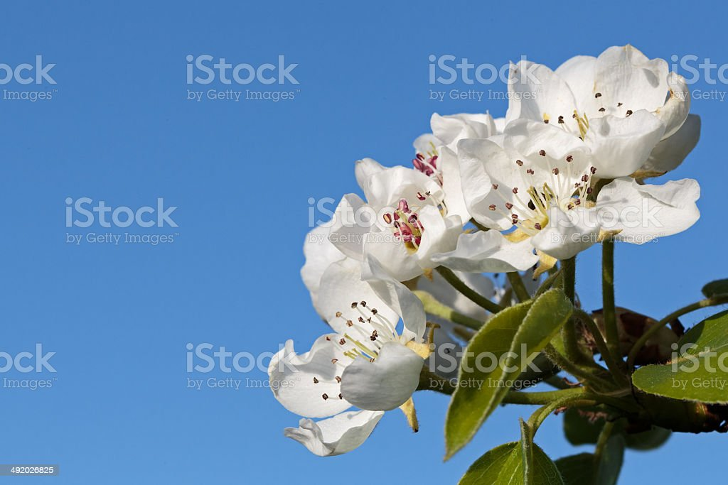 Tree flowers with open sky stock photo